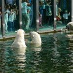 حديقة الحيوانات في برلين