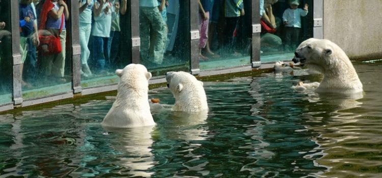 رحلة سياحية الي حديقة حيوان برلين