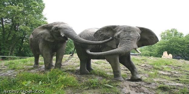 حديقة-حيوانات-أوبل-فرانكفورت