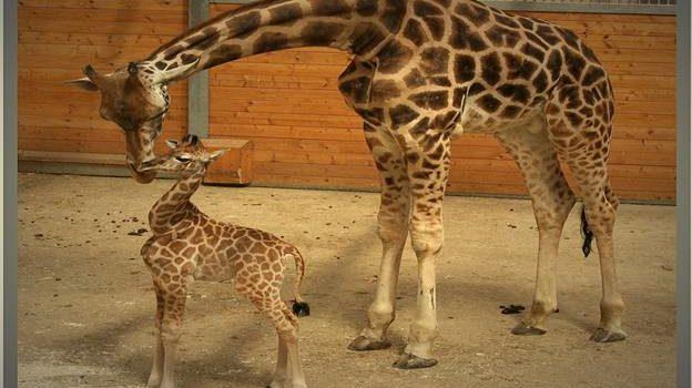 رحلة سياحية حديقة حيوان أوبل فرانكفورت